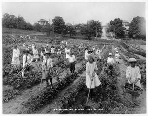 ALT:Brookline School students working in school garden, 1916. Pittsburgh Public School Photographs, MSP 117, Detre Library & Archives, Heinz History Center