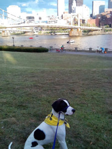 ALT:My dog, Baby Ruth, August, 2015, North Shore near the Clemente Bridge. | Your #Pixburgh Photo Album | #Pixburgh: A Photographic Experience