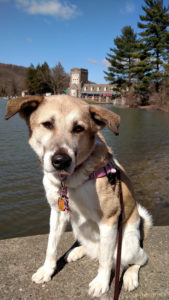 ALT:Gracie, a Great Pyrenees mix shelter dog, North Park, in front of the Boathouse. | Your #Pixburgh Photo Album | #Pixburgh: A Photographic Experience
