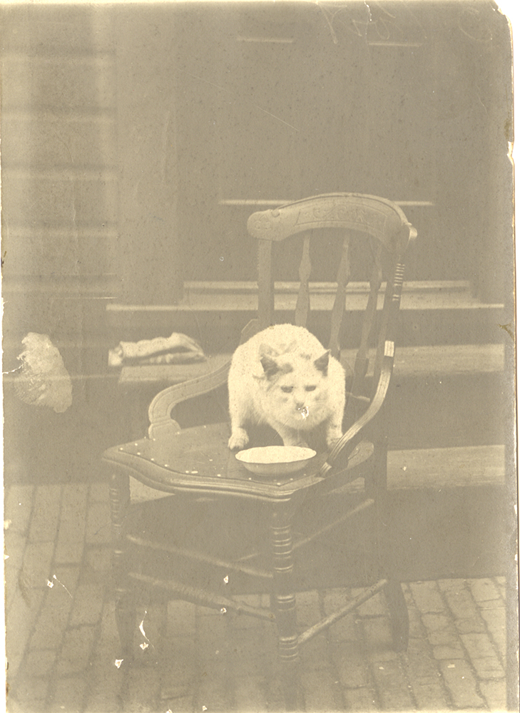 "Like most cats of the time, ""Jacko"" the Jones & Laughlin ""out cat"" was probably kept around mainly for pest control, c. 1900s. Jones and Laughlin Steel Company Photographs, MSP 33, Detre Library & Archives at the History Center."