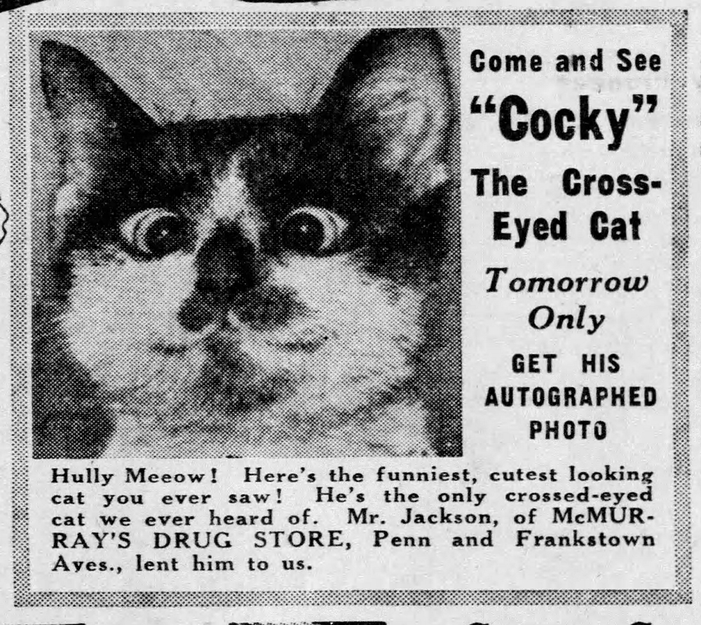 """Cocky"" the cross-eyed cat became a minor Pittsburgh celebrity in the 1940s. Pittsburgh Press, Friday, June 21, 1940."
