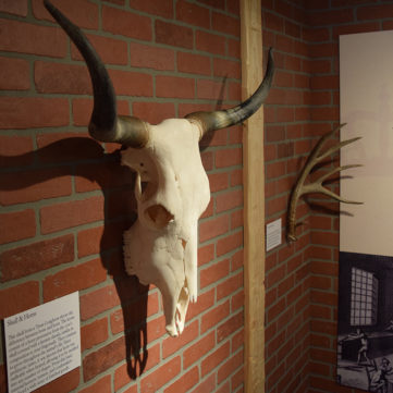 Skull and Horns | From Maps to Mermaids: Carved Powder Horns in Early America | Fort Pitt Museum