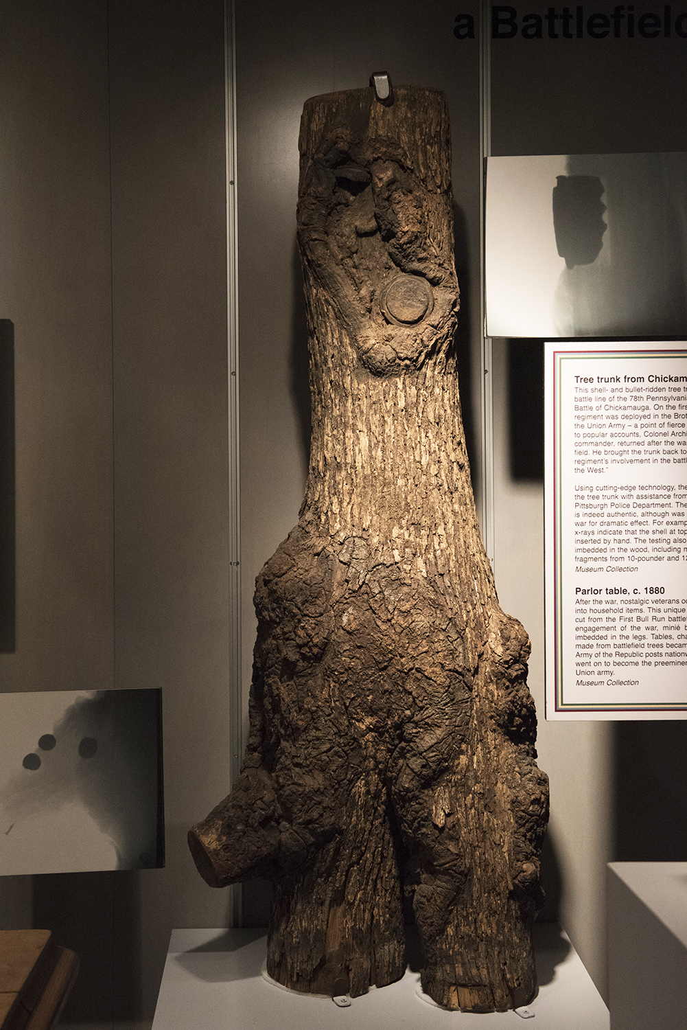 Tree trunk from Chickamauga Battlefield, 1863 | Special Collections Gallery, Heinz History Center
