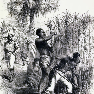 Sugar cane fields, From Slavery to Freedom
