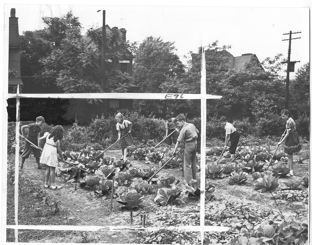 Holmes victory gardening