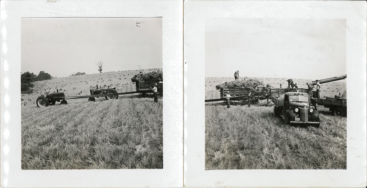 Threshing wheat with tractors and a threshing machine in 1947.