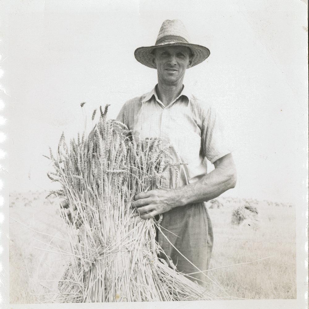 Aug. 12, 1947: Miller photographed Dean Fullerton holding a sheaf of wheat waiting to be threshed. Photo Albert Miller Photographs, Meadowcroft Rockshelter and Historic Village, Heinz History Center.