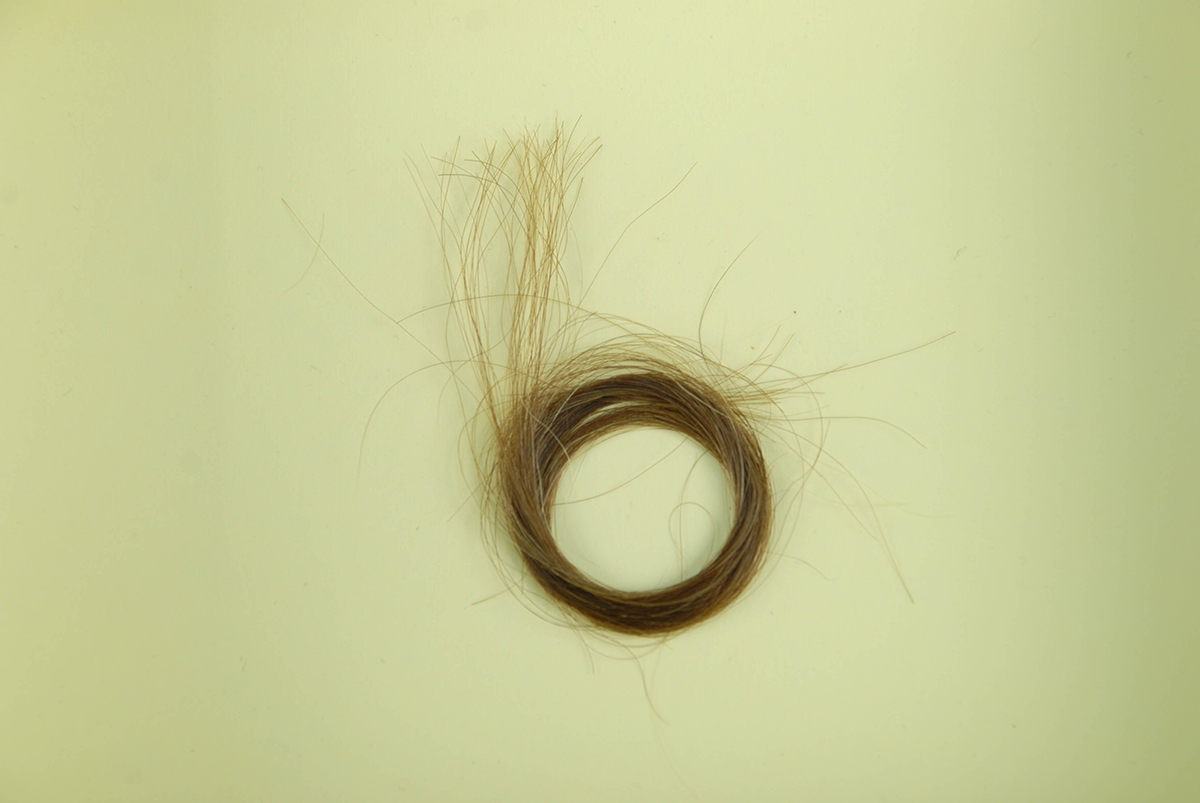 A lock of Phoebe Brashear's hair, Heinz History Center.