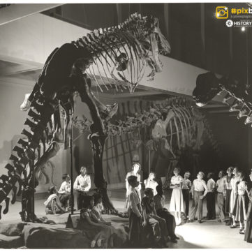 Students ponder T. Rex at the Carnegie Museum of Natural History, Oakland, 1951. | pixburgh: a photographic experience, Heinz History Center
