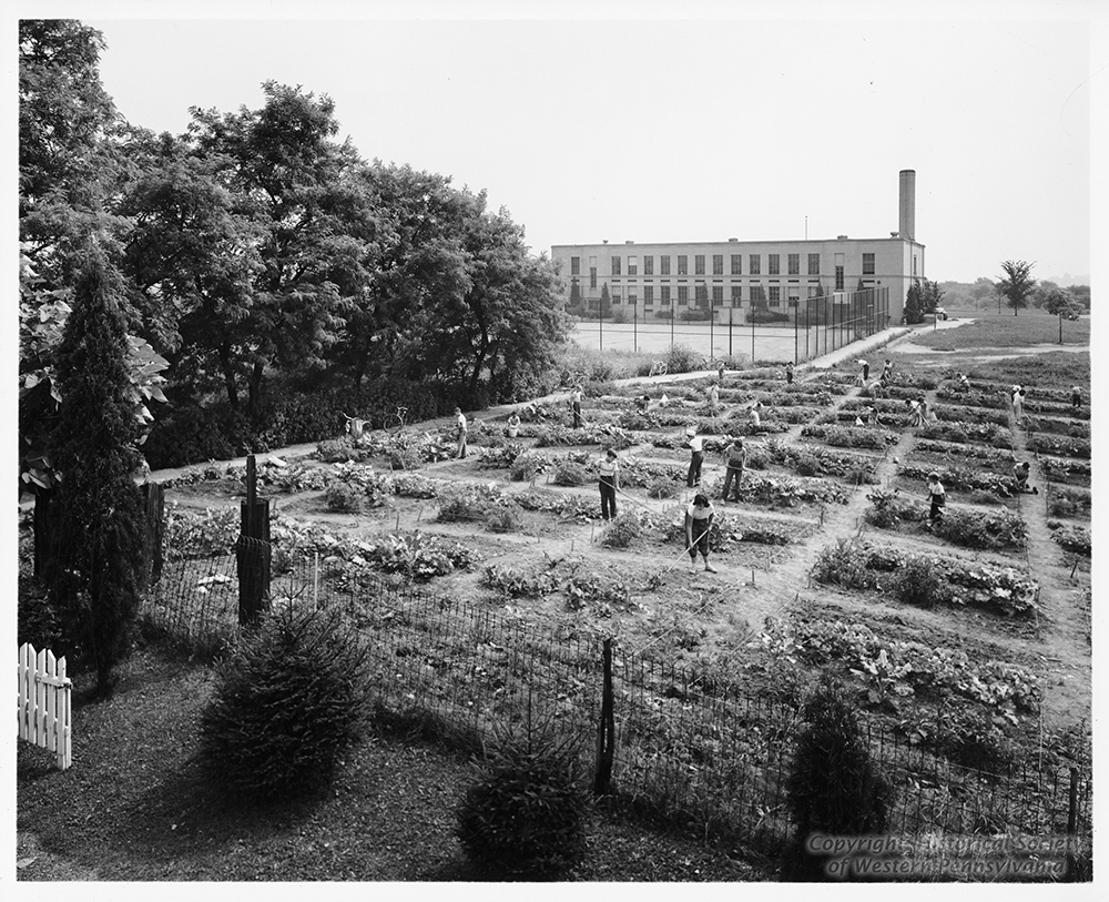 Students cultivate rectangular plots behind West Liberty School, 1951. | The Edible Schoolyard, 1915
