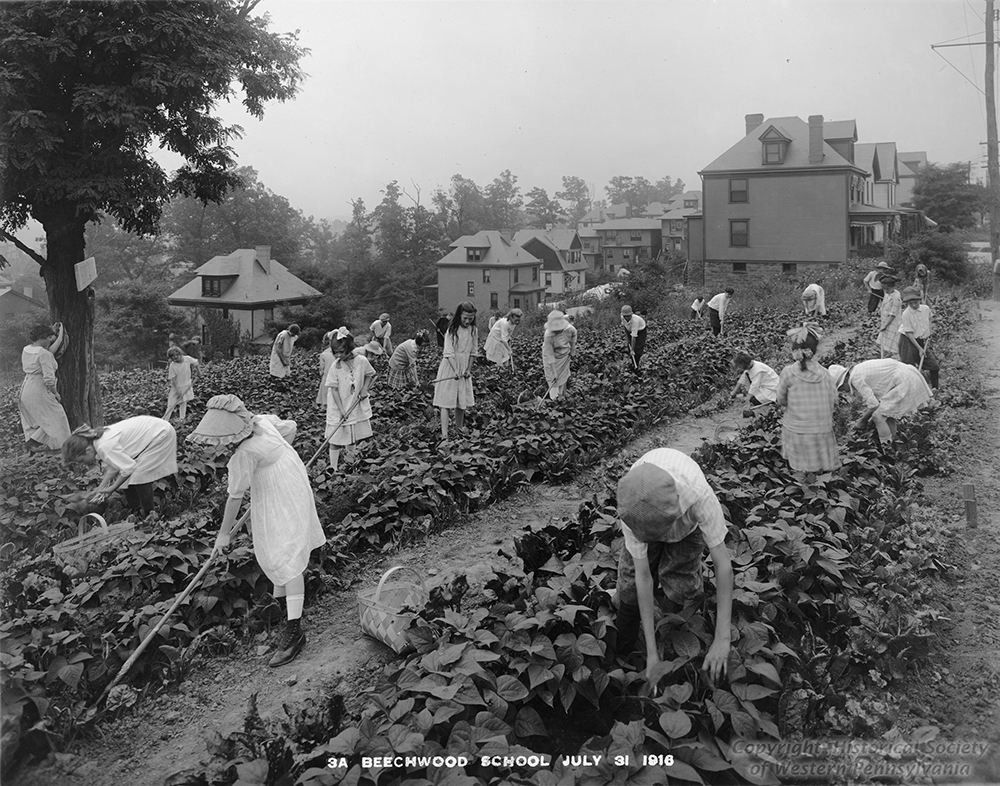 A teacher looks on as students hoe and gather beans at the Beeechwood School, 1916. | The Edible Schoolyard, 1915