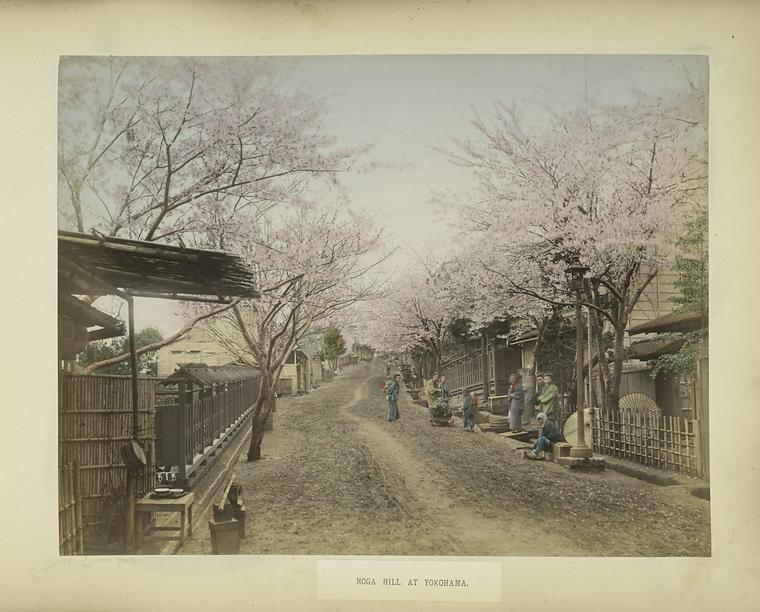 Cherry trees on Noga Hill in Yokahama, c. 1890. Courtesy of the New York Public Library.