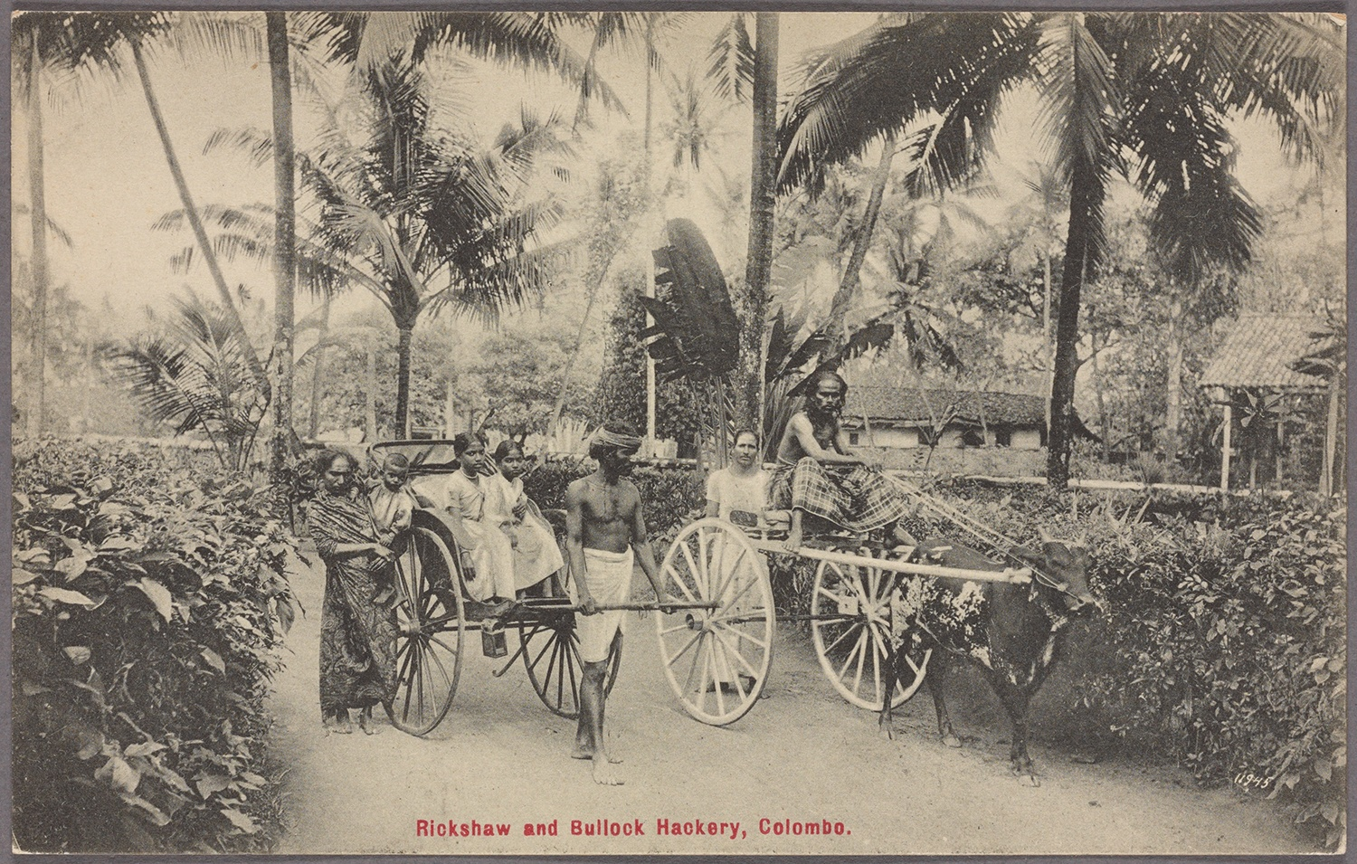 Rickshaw drivers and passengers in Colombo, c. 1910. Courtesy of the New York Public Library.